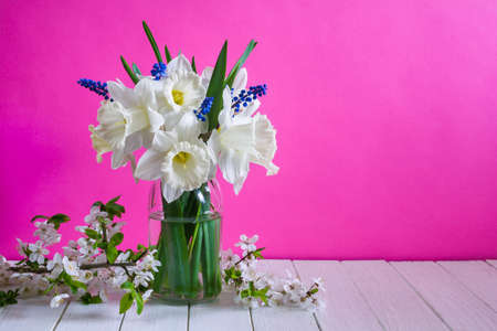Bouquet of beautiful daffodil flowers in a vase on a pink background. Still life Stock Photo
