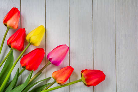 Beautiful flowers of tulips on a white wooden background Stock Photo