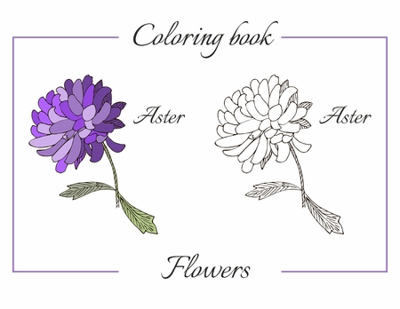 aster: Coloring book with beautiful aster flower. Cartoon vector illustration for children education.