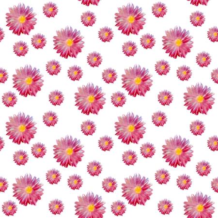 aster: Seamless watercolor pattern with beautiful aster flowers. Stock Photo