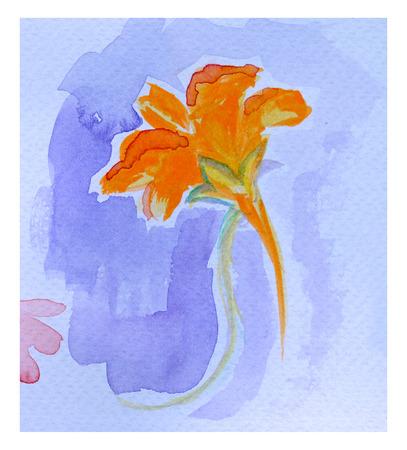 nasturtium: Beautiful orange flower, watercolor painting. Nasturtium. Tropaeolum.