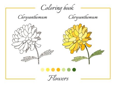 Coloring Book With Beautiful Chrysanthemum Flower. Cartoon Vector ...
