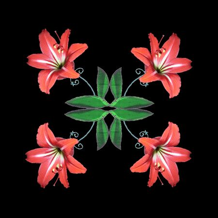 Efflorescent patchwork. Beautiful amaryllis flowers blooming on patchwork leaves. Floral card on black background.