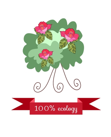 shrub: Shrub roses, isolated on white background with red banner. Beautiful styling. Packaging Design for the rose oil, rose petal jam.  Vector illustration. Illustration