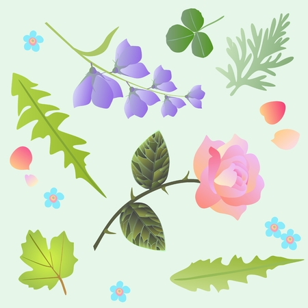 Design elements. Rose, bell flowers, forget me not, leaves of dandelion, viburnum, wormwood, clover and petals, isolated on light green background. Springs motives. Illustration