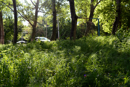 Indepedent の町の美化。ゲリラ ・ ガーデニングの例として気取らない植物と都市の中庭の緑。田舎の懐かしさ。