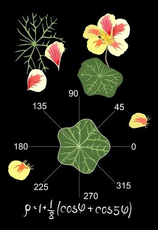 Entertaining mathematics.  Trigonometric equation and graph describing the shape of a leaf of nasturtium. Beautiful card, teachers manual. Vector illustration.