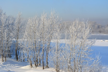 Winter in the forest on river coast. The trees are covered with hoarfrost. Cold wintry day. Stock Photo