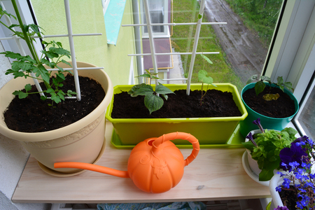 Balcony greening. Urban small garden with potted plants and  bright orange watering can.