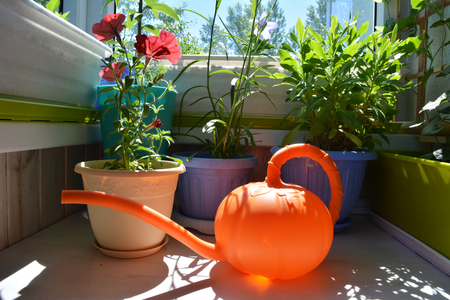 Balcony gardening. Petunia, osteospermum and other plants in flower pots and orange watering can in foreground.