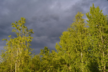 Before the storm. Thunderstorm sky over forest. Trees are lighted by sun. Stock Photo