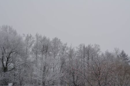 Winter scene with trees covered by hoarfrost in cloudy quiet day.