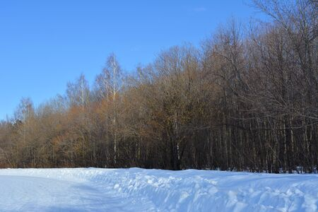Forest in march. Snowy field and trees on the background of clear blue sky.