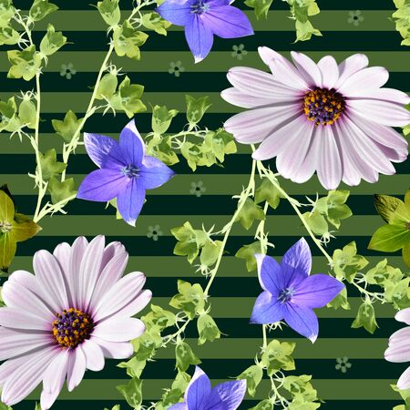 Floral seamless pattern. Beautiful summer flowers - osteospermum (african daisy) and bellflowers - on striped background. 스톡 콘텐츠