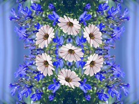 Beautiful floral seamless pattern with daisies flowers on the background of lobelia. Print for fabric, bed linen, wallpaper.