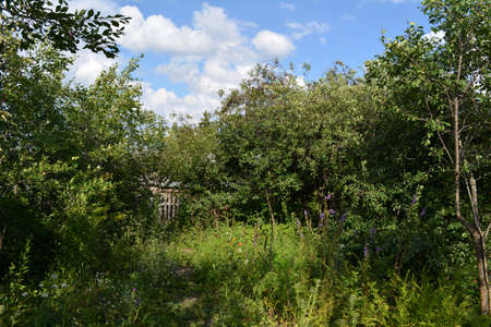 Rural garden in summer. Countryside view. Landscape with fruit trees and herbs. 版權商用圖片 - 153878652