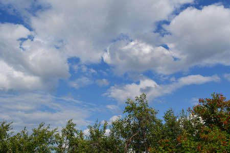 Summer landscape. Sky with clouds and tree tops. Garden in warm sunny day. 版權商用圖片