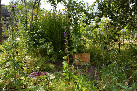 Rural garden with trees, and wild and cultivated herbs.