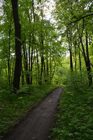 Walking path in lush green forest in may. 版權商用圖片