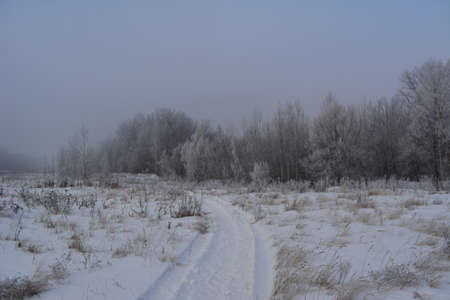 Beautiful winter landscape on a cloudy day. Snowy road through the field to the forest.
