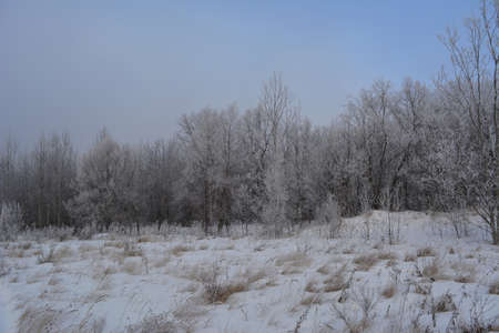 Beautiful winter landscape with snowy forest and field in overcast day