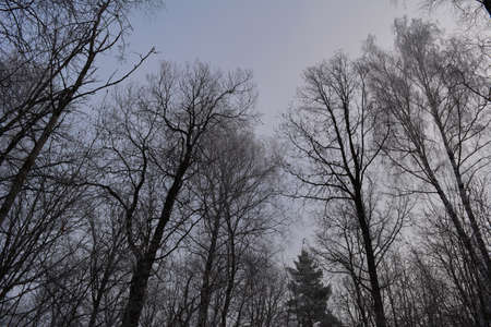Picturesque winter scene in forest with trees on the background of sky 免版税图像