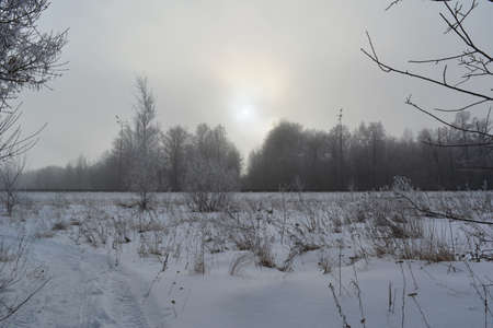 Winter landscape with dry herbs on snowy field, trees in hoarfrost and sun lighting through clouds
