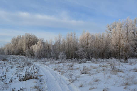 Picturesque winter landscape. Walking path through snowy field with dry herbs to forest with trees in hoarfrost.