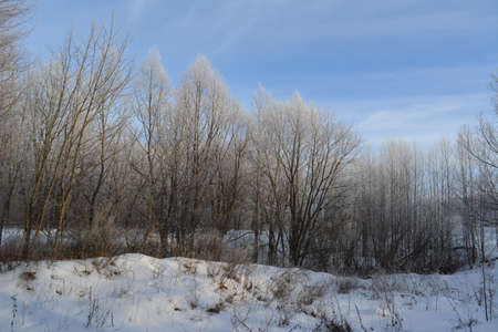 Beautiful winter landscape with frosty forest.