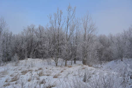 Beautiful winter landscape with trees covered by hoarfrost.