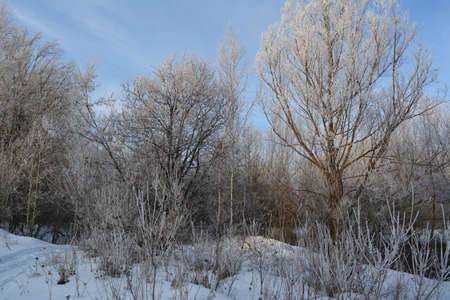 Wonderful winter landscape with trees covered by hoarfrost. 免版税图像