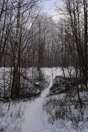 Walking path through ravine in winter forest