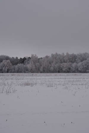 Winter landscape with snowy field and forest on the horizon. Quiet cloudy day. 免版税图像