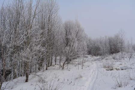 Walking path in snowy winter forest. Beautiful landscape with trees in hoarfrost
