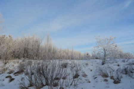 Winter landscape. Trees, shrubs and herbs are covered by hoarfrost. 免版税图像
