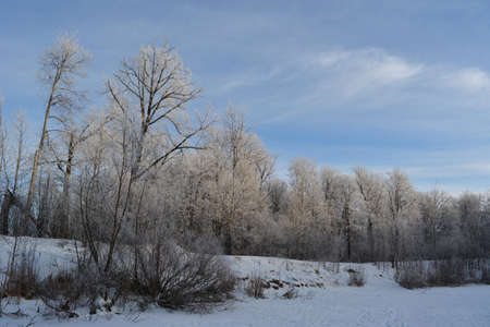 Beautiful winter landscape with trees in hoarfrost on the bank of snowy lake 免版税图像