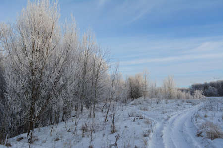 The path by the snow to the snowcovered winter forest 免版税图像