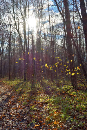 Beautiful landscape with autumn forest lit by sunshine