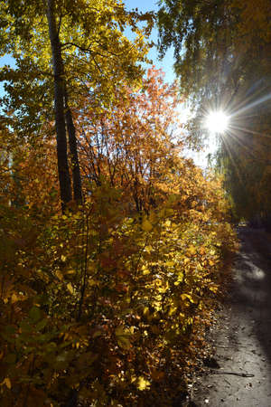 Autumn landscape in the park with sun beams through trees with bright leaves