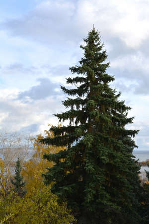 Beautiful autumn landscape with fir tree in the park