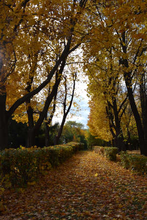 City park in autumn. View on path, covered by fallen leaves, going through alley with shrubs and trees.