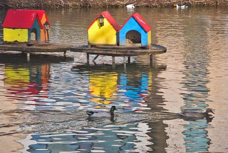 Ducks swimming in a pond Stock Photo - 401036
