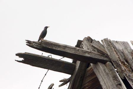 Spooky bird photo