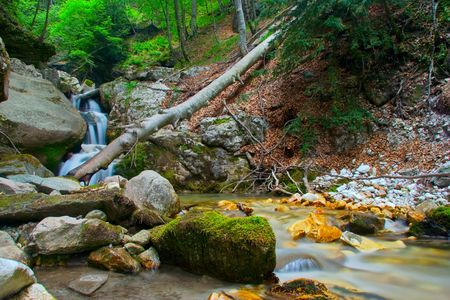 Beautiful brook in the forest photo