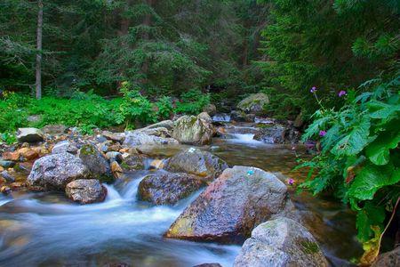 Stream rushing through the forest in Macedonia photo