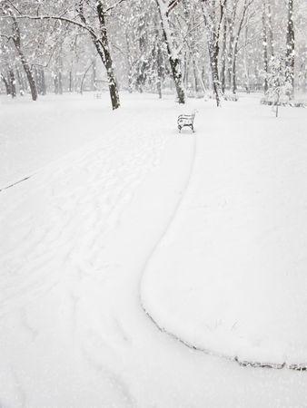 Snowfall in the city park photo