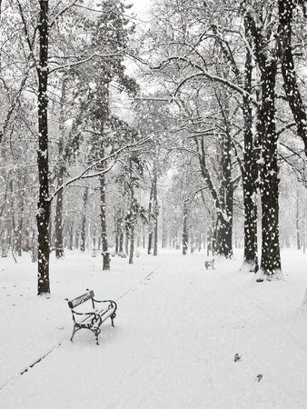 Snowfall in the city park in Skopje photo