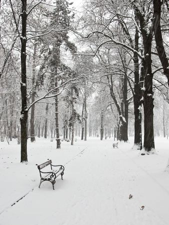 Empty bench in the park in winter Stock Photo