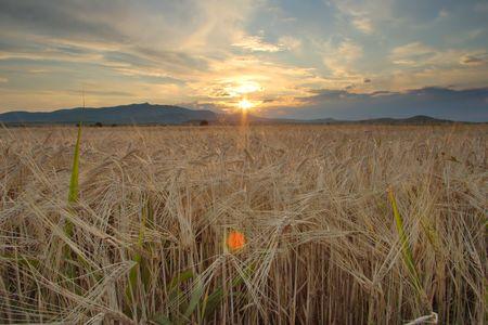 Sunset in the field in Macedonia Фото со стока