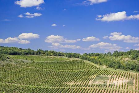 macedonia: Vineyard in Macedonia